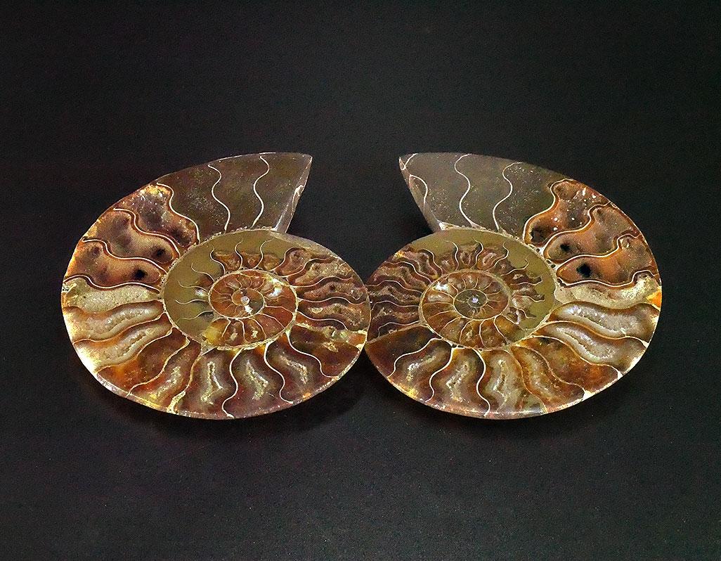 Ammonit geteilt