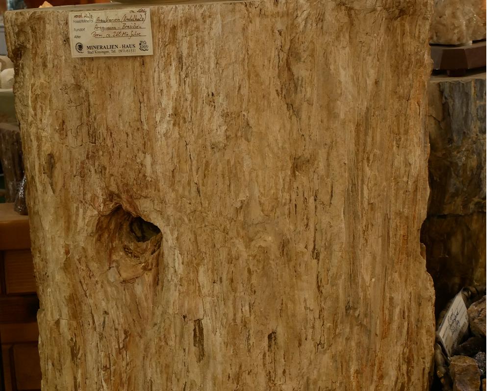 versteinertes Holz Stamm